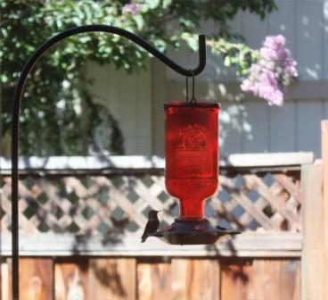 Hummingbird at feeder 3